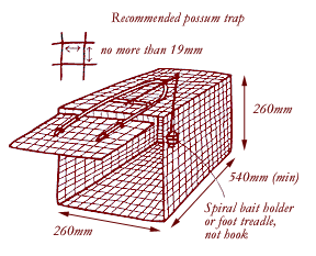 Possum trap with no more than 19mm sized mesh holes. Should be 260mm  high, 540mm long and 260mm wide at the minimum with a spiral bait holder, not a hook.